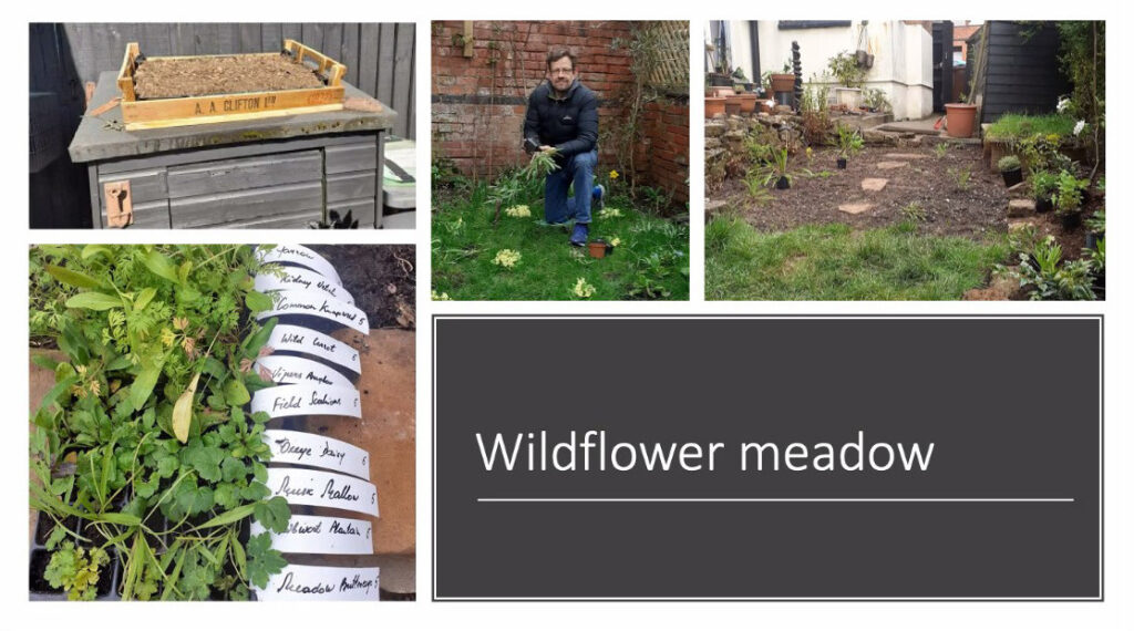 Slide from talk about increasing wildlife in your garden - Wildlife meadows